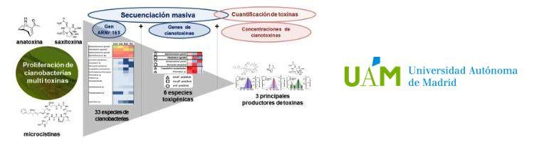 Investigadores de la UAM y CEDEX desarrollan un nuevo método para identificar cianobacterias tóxicas en embalses